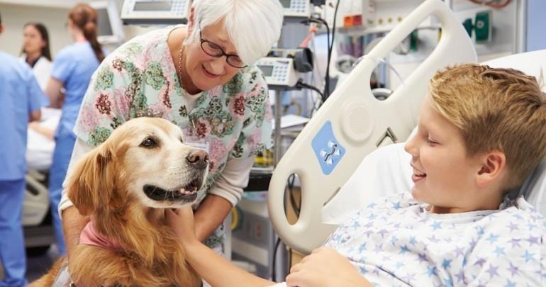 evcil-terapi-hayvanlari-nelerdir