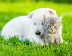 Hayvanları Koruma Günü nedir ve ne zaman kutlanır