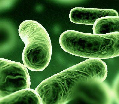 Bakteri solunumu nasıl olur