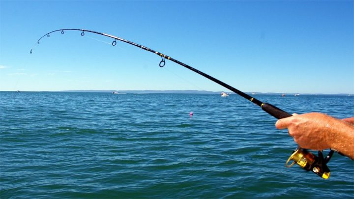 Yeni başlayanlar için balıkçılık malzemeleri 2