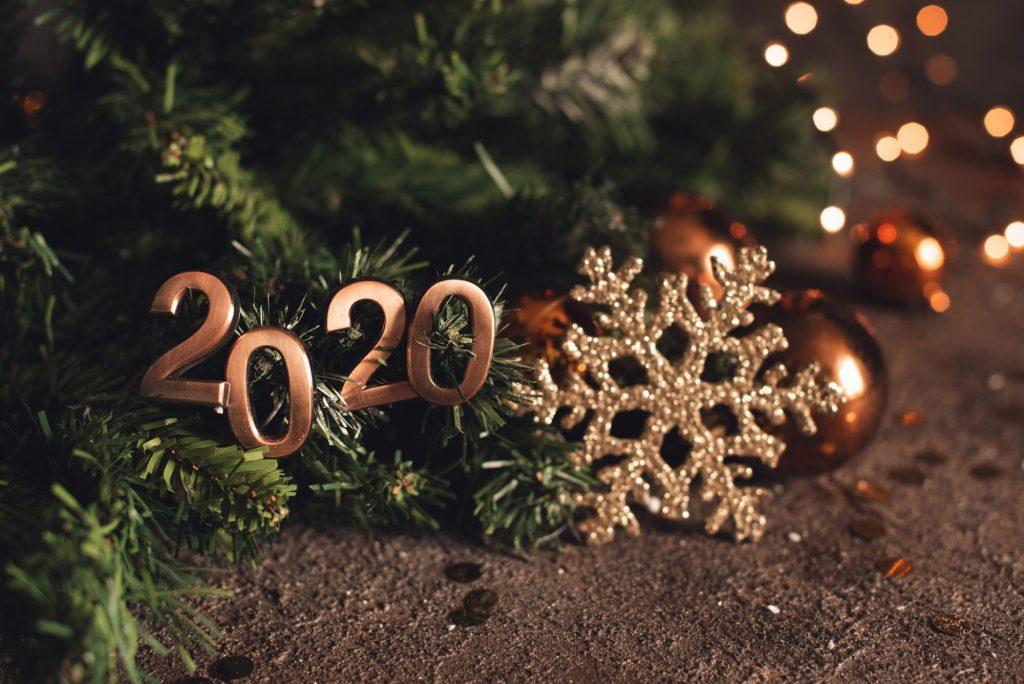 çam ağacı 2020